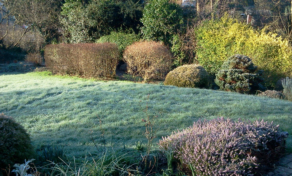 2016-01-19 Frosty garden small