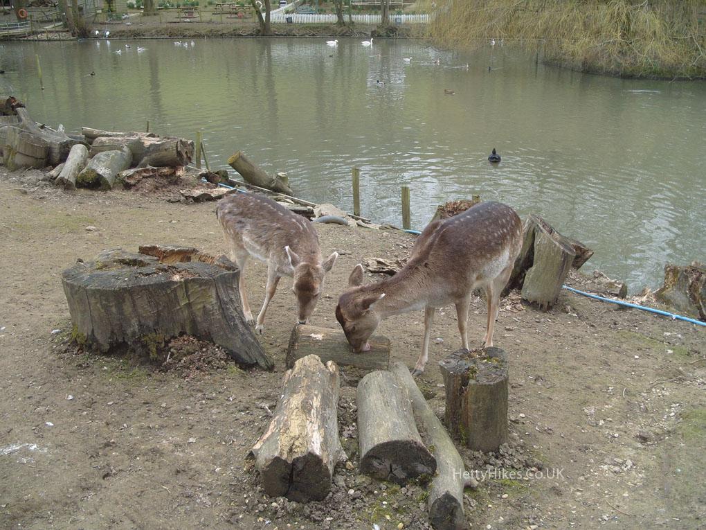 13 deer 2 copy